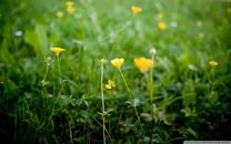 清新唯美的植物高清壁纸